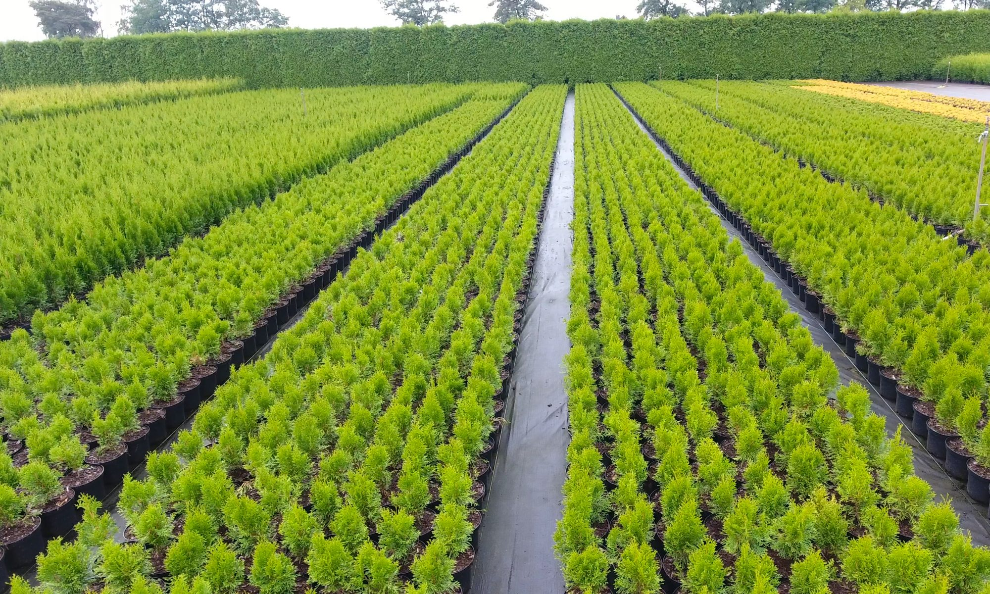 etykiety pętelki ogrodnicze