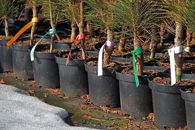 garden-label-etykiety-ogrodnicze