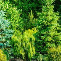 Jak ważne dla naszego życia są rośliny?