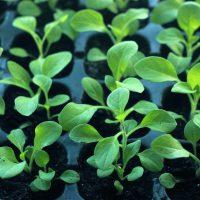 Paszportyzacja roślin ipaszport roślin – nowy system zdrowia roślin