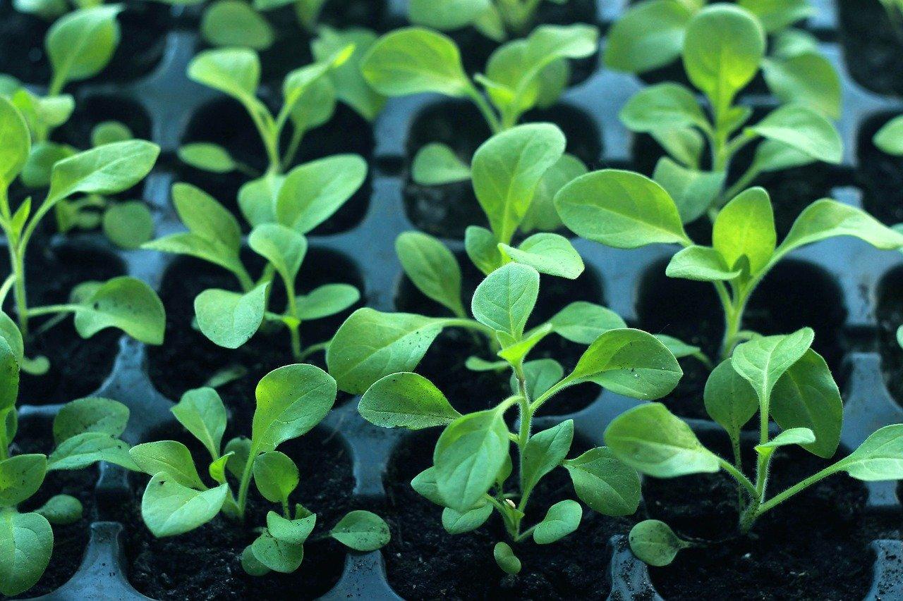 Paszportyzacja roślin i paszport roślin – nowy system zdrowia roślin