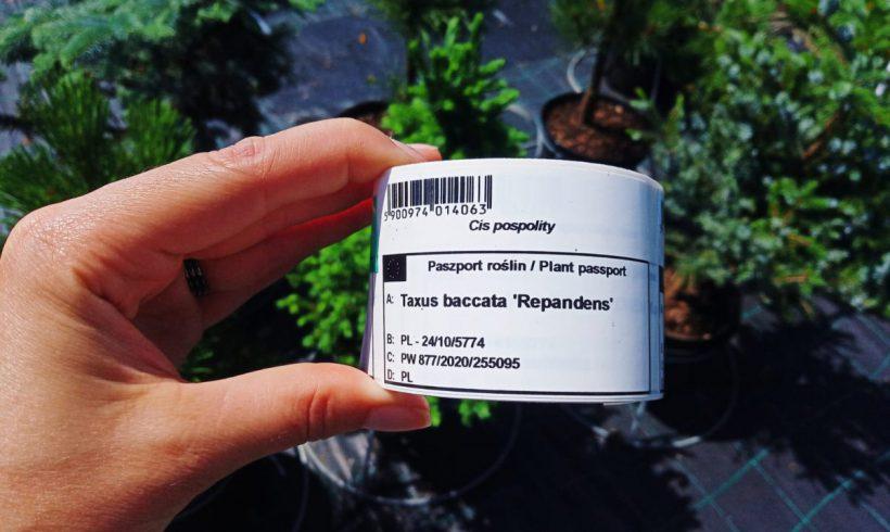 Plant passport – co tojest paszport rośliny ijaka roślina musi go posiadać?