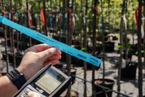 Dane zapisane wkolektorze można eksportować dokomputera, bywydrukować odpowiedni dokument sprzedażowy lub magazynowy. Przykład użycia kolektora wszkółce roślin Kapias Grupa (Fot.Garden Label).