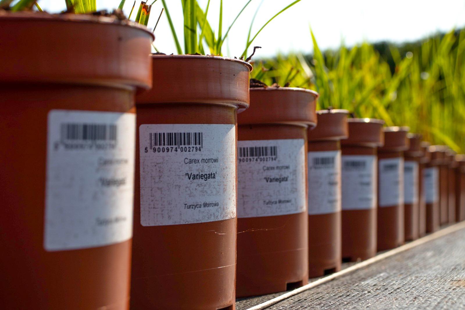 znakowanie-roslin-na-doniczce-etykiety-do-roslin-Garden-Label