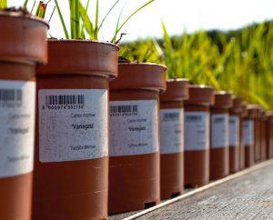 Samoprzylepne etykiety doroślin są szybkim iwygodnym rozwiązaniem doznakowania roślin nadoniczkach. Fot.Garden-Label.