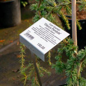 Etykiety samoprzylepne-z nadrukiem mogą być nośnikiem informacji oroślinie, kodu kreskowego, ceny. Przykład zastosowania. Fot.Garden-Label